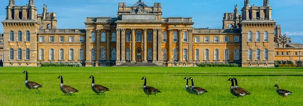 Blenheim Palace header image