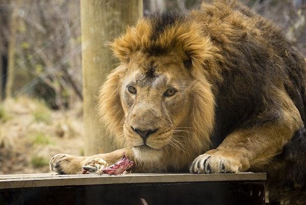 London Zoo header image